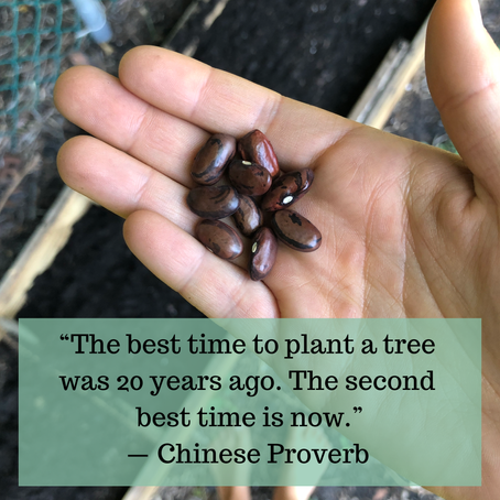The Power of Planting Mental Seeds