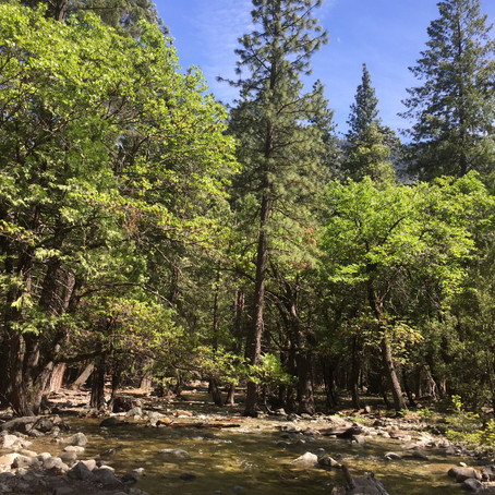 Forests Regrow After Fires