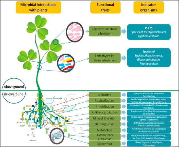 soil health, microbial interactions, soil microbes, organic farming, we are all connected