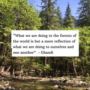 Forest Health = Human Health