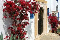 tunisia-1463720_1920-350x234.jpg