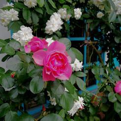 jardin019.jpg