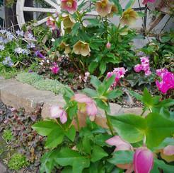 jardin023.jpg