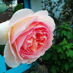 jardin014.jpg
