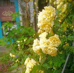 jardin06.jpg