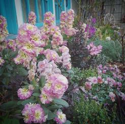 外に出ると花の匂い。春ですね #春 #花 #庭 #printemps #fleu