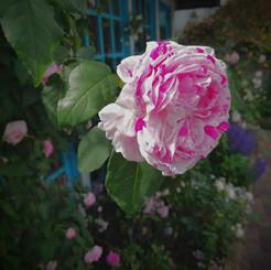 jardin016.jpg