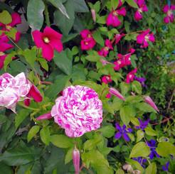 jardin027.jpg