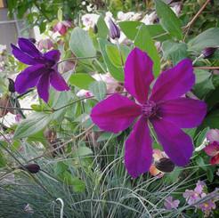 fleur06.jpg