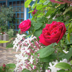 jardin05.jpg