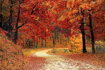 fall-autumn-red-season-woods-nature-leav