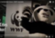 wwf video.png