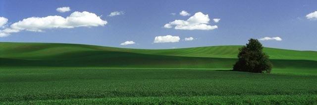 """Lone Tree (image size 9"""" x 27"""") Palouse region of Washington State"""