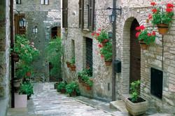 Assisi Geraniums