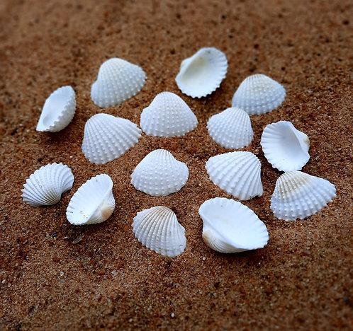 Haastika Crafts Natural Sea Shells - Cockle Shell Mini for Home Decor, Aquarium