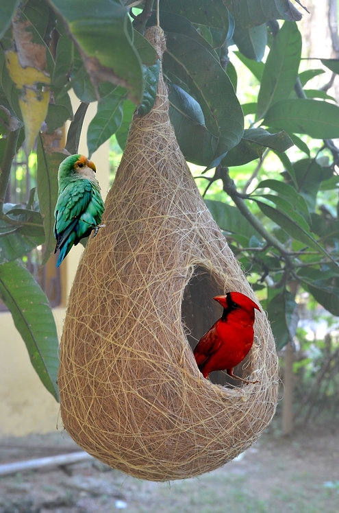 Haastika Coir Craft Bird Nest for for cage and Balcony Birds Sparrows Finches