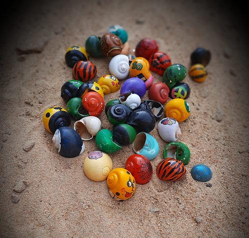 Haastika Sea Shell Handicraft Decorative Snail for Home and Aquarium Decoration
