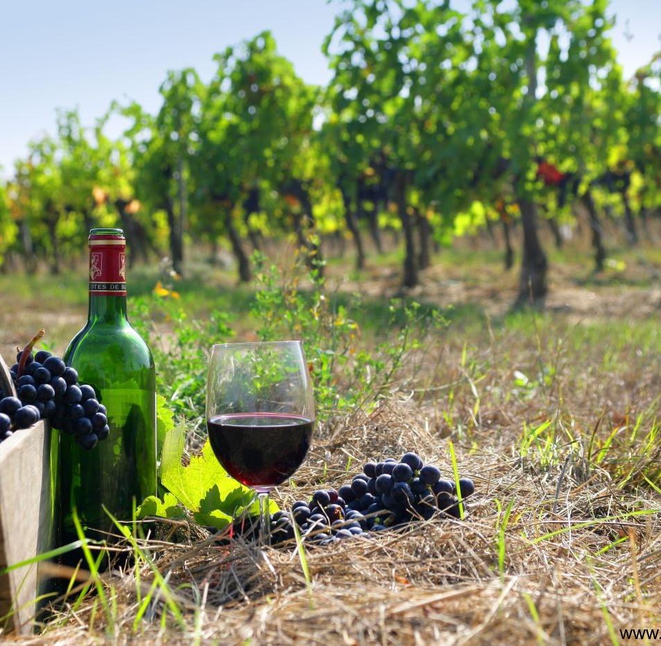 greek-wine.jpg