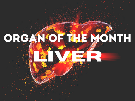 The Organ of the Month: Liver