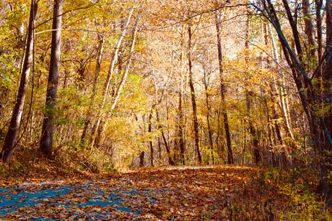 """""""Missouri Autumn"""" Doreena Forqueran"""