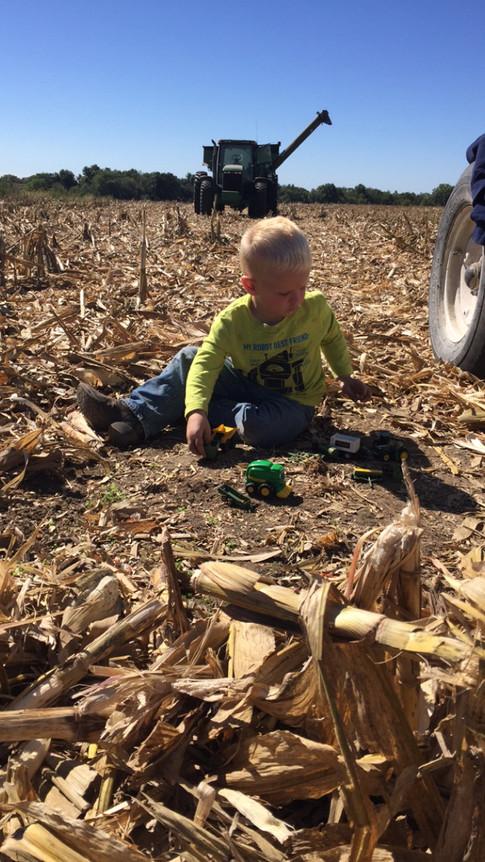 """Harvesting the Crops"" Sara Sims"