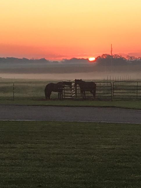 Beautiful Morning on the Farm - Lesa Banks