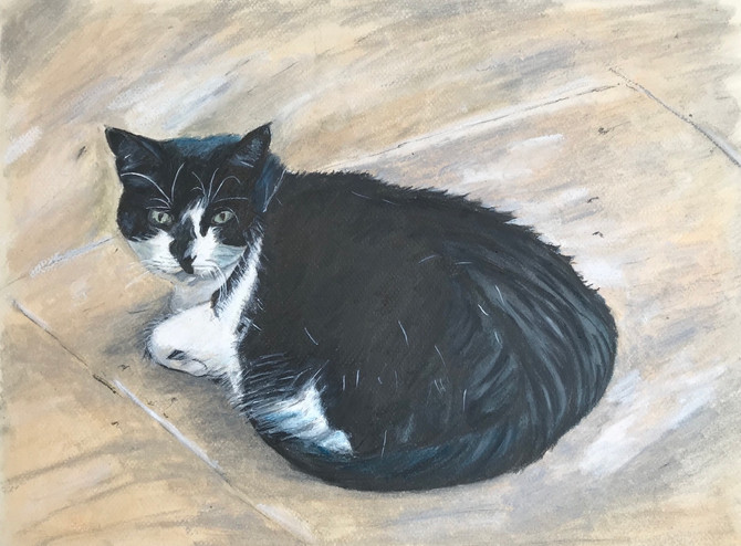 """""""Lily Mae"""" Pusscat no2"""