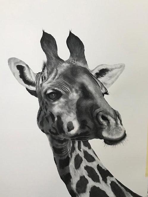Giraffe by Humphrey Bangham, Charcoal on paper 94x63cm