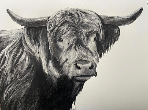 Cow by Humphrey Bangham, Charcoal on paper