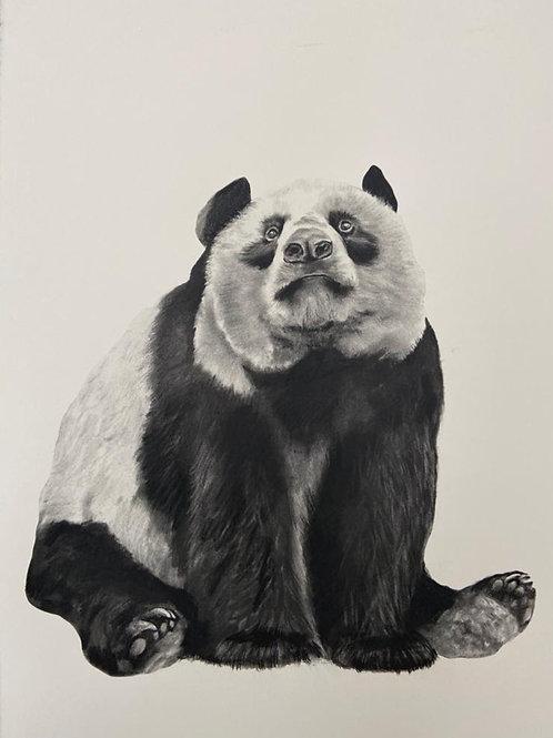 Panda by Humphrey Bangham, Charcoal on paper 72x53cm