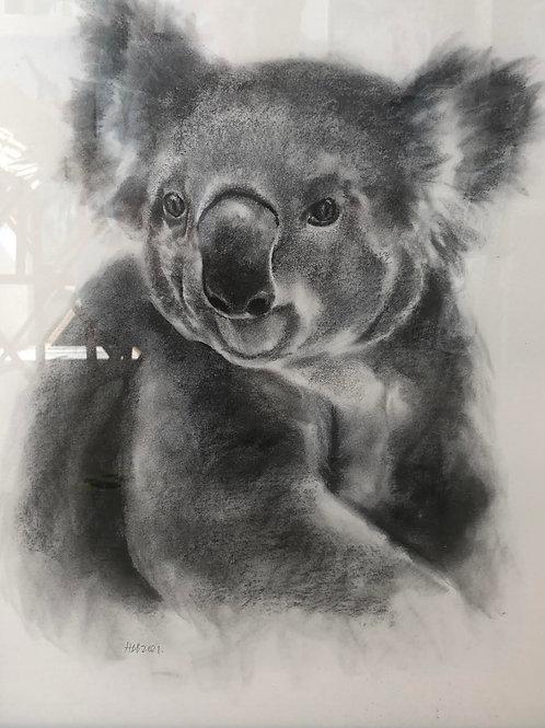 Koala by Humphrey Bangham