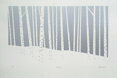 Silver Birches by Rennie P 57x38cm