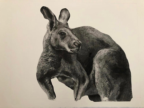 Kangaroo by Humphrey Bangham, Charcoal on paper 50x40cm