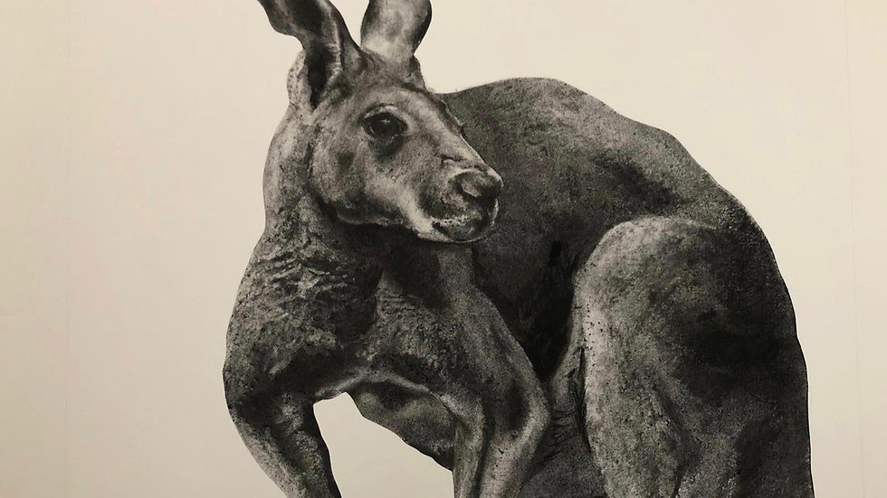 Kangaroo by Humphrey Bangham, Charcoal on paper