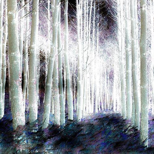 Les Landes by Rennie P 50x50cm