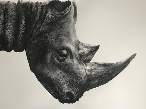 Black Rhino by Humphrey Bangham, Charcoal on paper 94x63cm