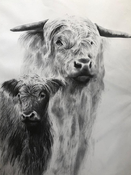 Mother and calf portrait by Humphrey Bangham, Charcoal on paper 69x94cm