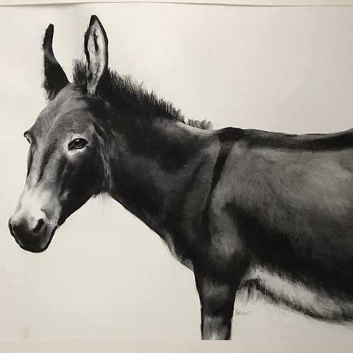 Donkey by Humphrey Bangham, Charcoal on paper