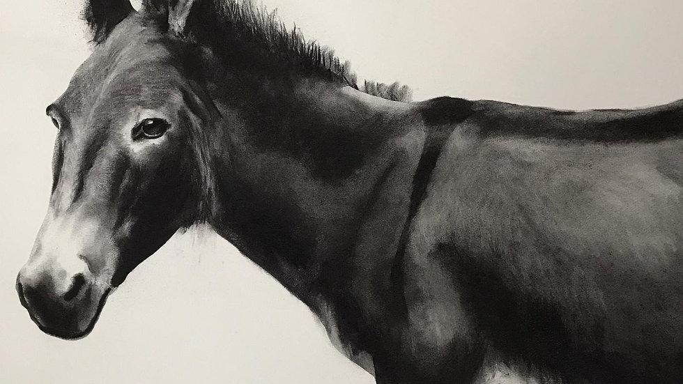 Donkey by Humphrey Bangham, Charcoal on paper