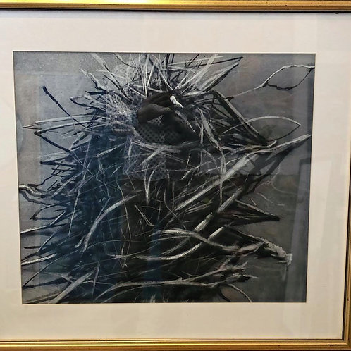 Coots 1 by Humphrey Bangham, Charcoal on paper