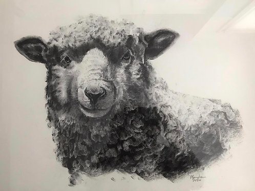Sheep by Humphrey Bangham, Charcoal on paper