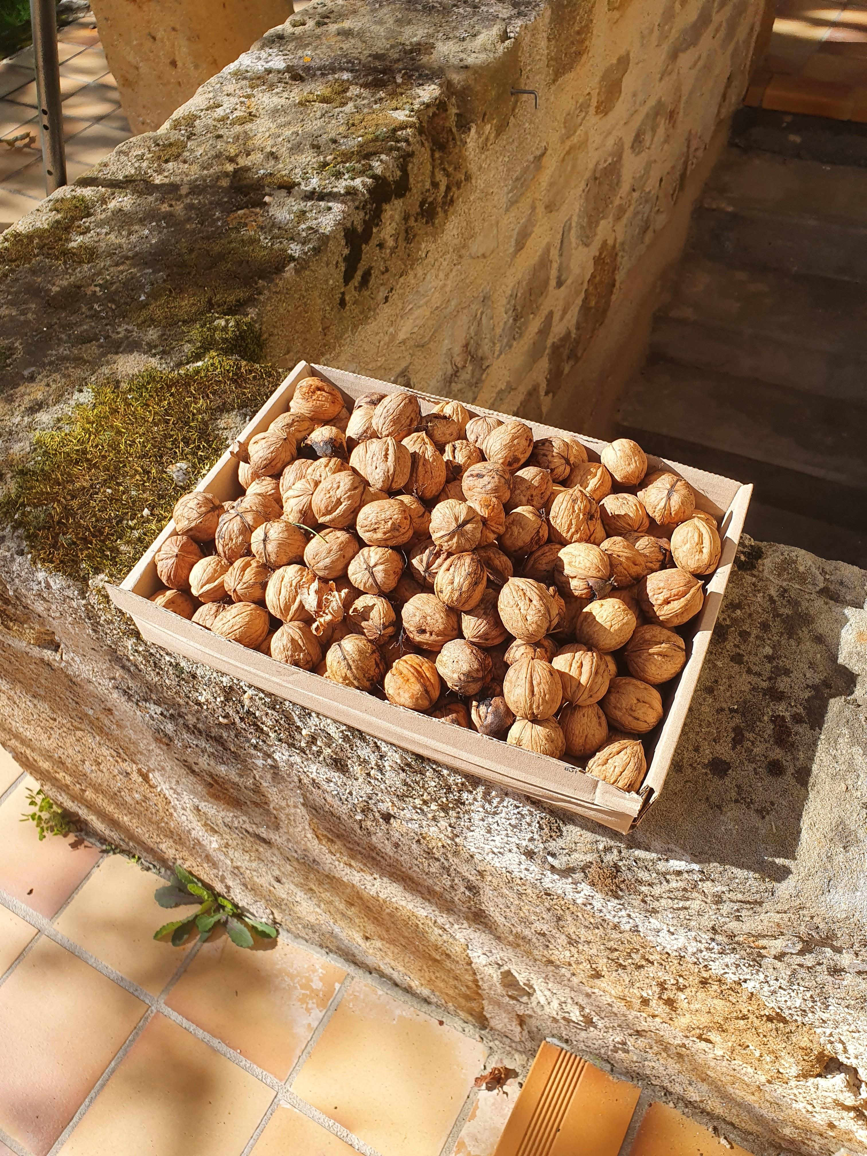 les noix du jardin