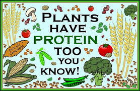 You're Vegan? Where Do You Get Your Protein From?