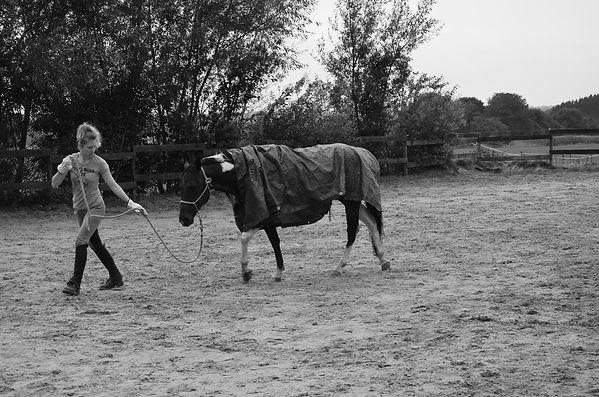 Rééducation du cheval