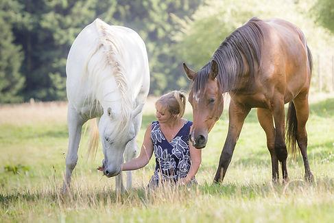 méditation cheval