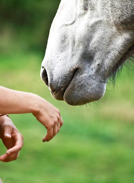 cheval autrement
