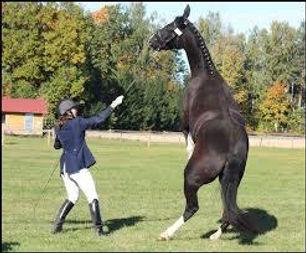 Stge La peur chez le cheval