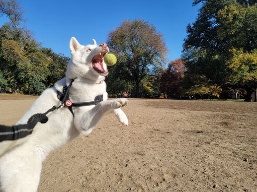 BarkSupport-Brooklyn-Dog-Walking-Pet-Car