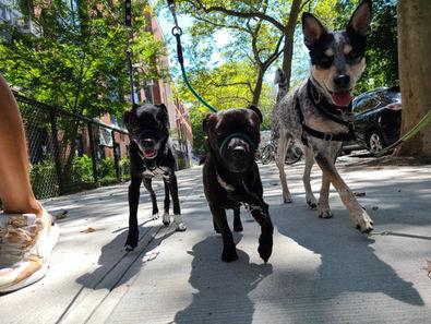 Gang-Bark-Support