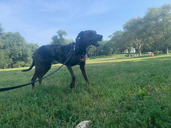 BarkSupport-Georgia-Brooklyn-Dog-Walking